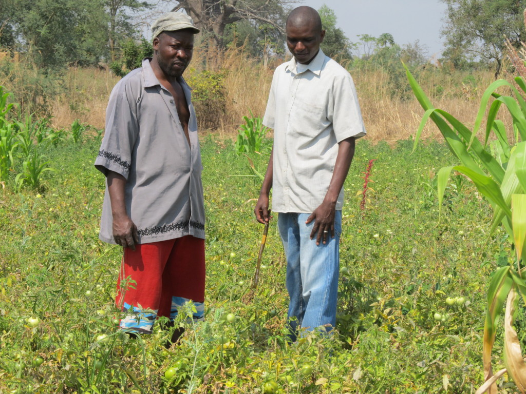 Goster posing with Kandeu in his tomato field