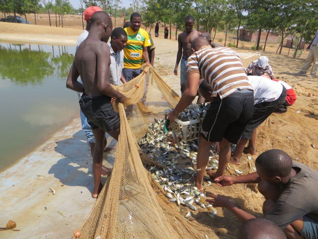 fishharvest2
