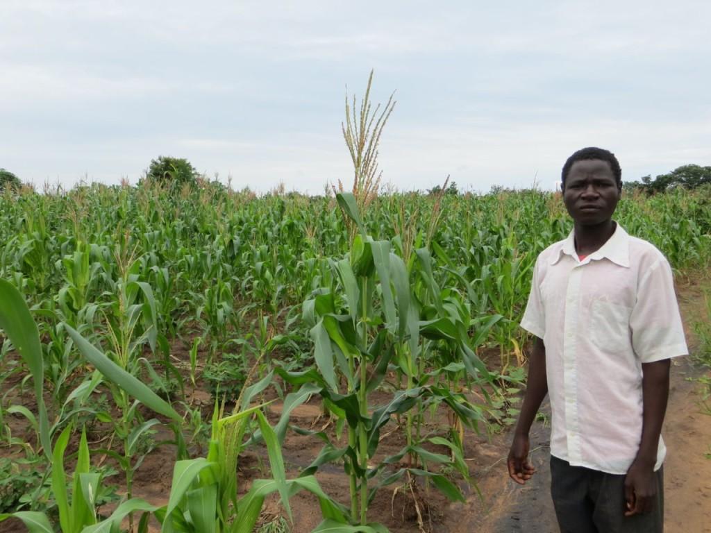 Kasimu with his maize field